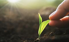 safe_for_seeds