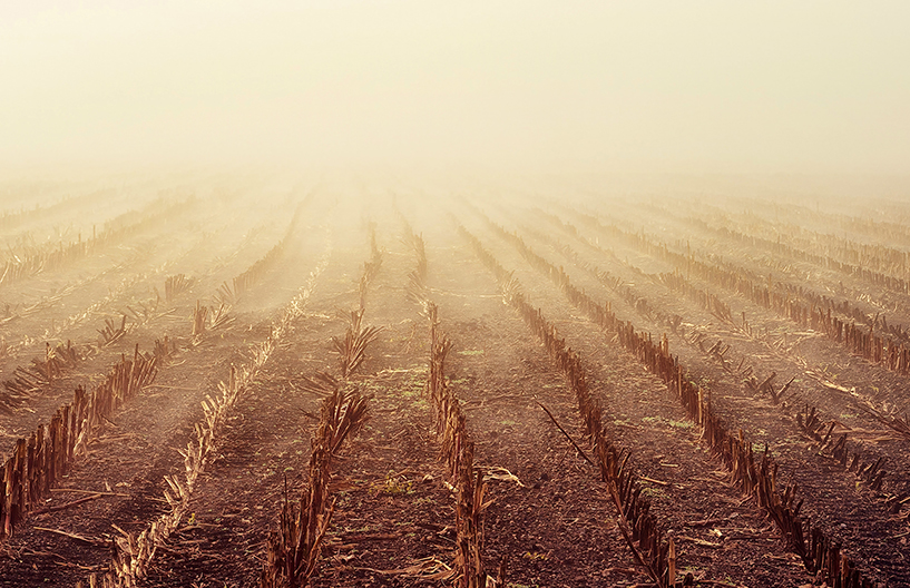 A view of a cut corn field with rows of stubble on a foggy day
